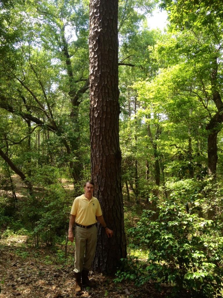 saw log tree