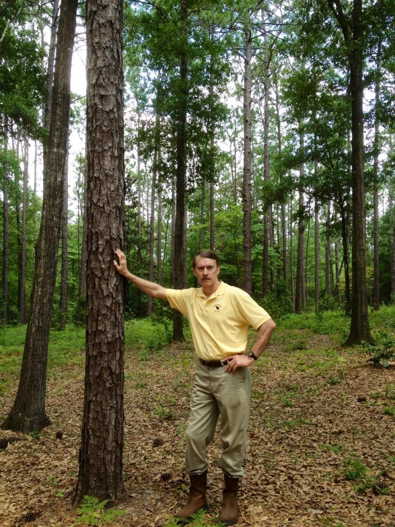 "(Alabama's ""Money Tree"")"
